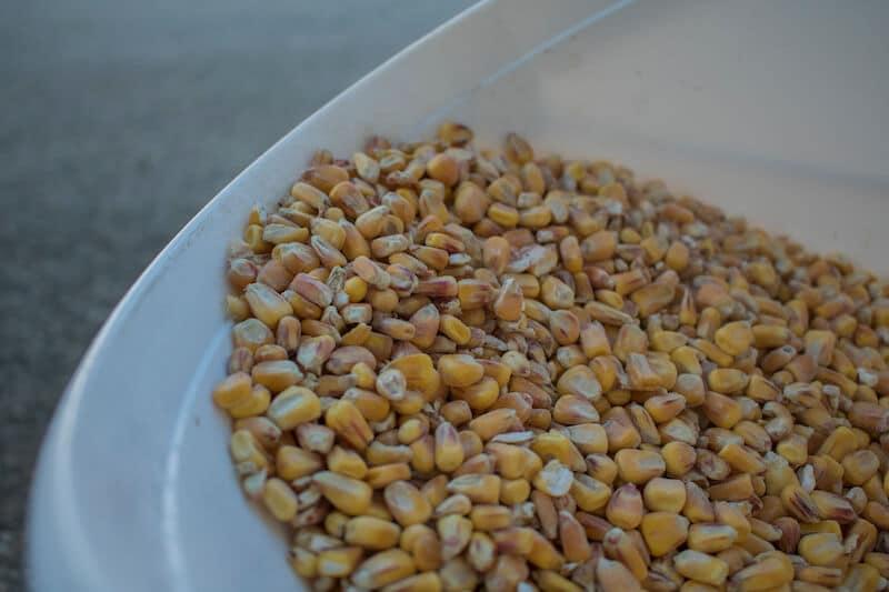 Partikelköder Mais