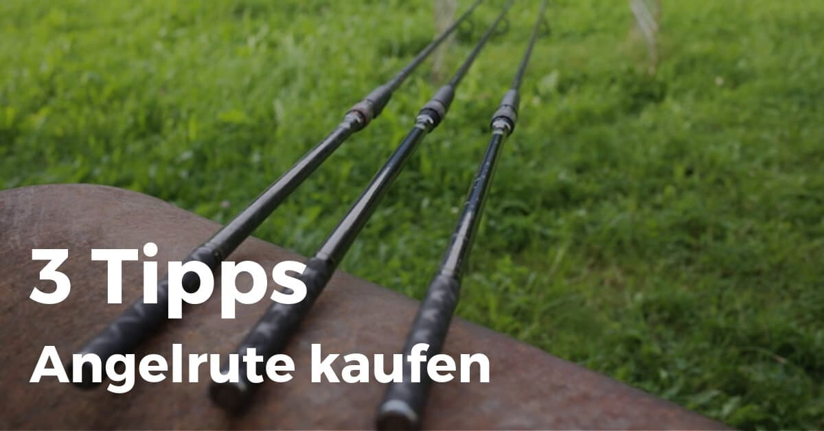 Karpfenrute - 3 Tipps beim Kauf deiner Angelrute