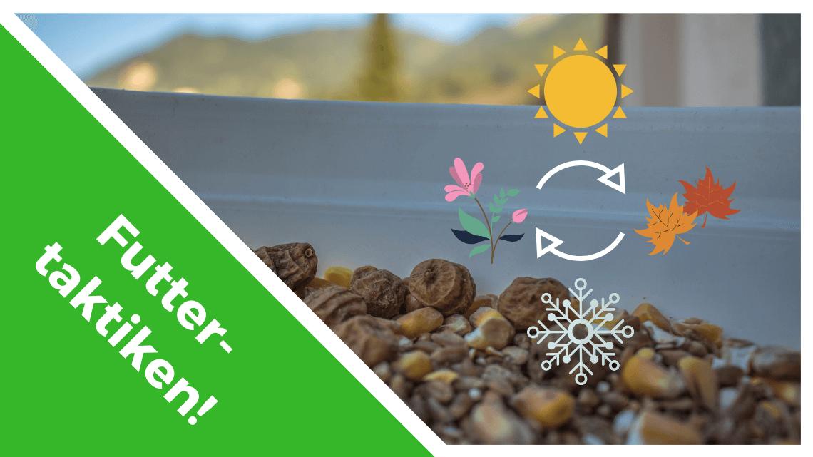 Verschiedene Futterstrategien für verschiedene Jahreszeiten beim Karpfenangeln