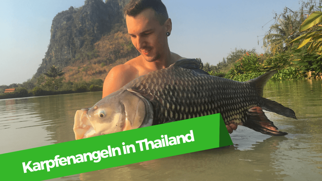 Karpfenangeln in Thailand am Jurassic Fishing Park